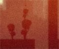 שלושה אחים